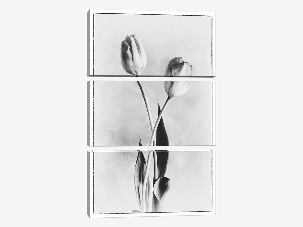Soft Tulips IV 3-piece Canvas Wall Art