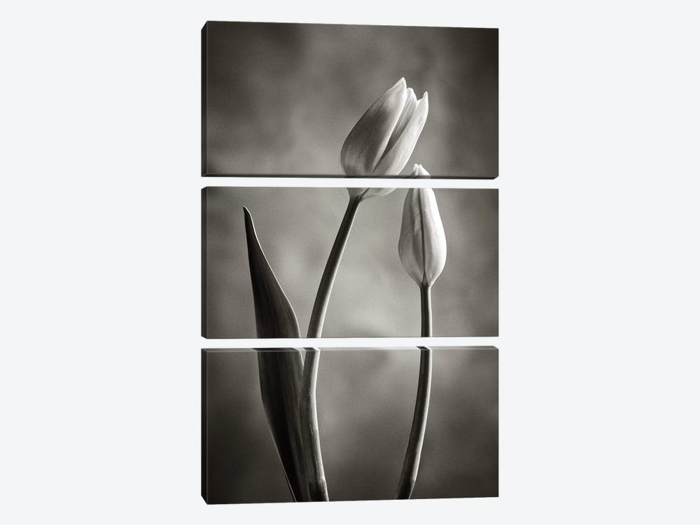Two-tone Tulips III by Debra Van Swearingen 3-piece Canvas Wall Art