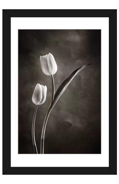 Two-tone Tulips IV Framed Art Print