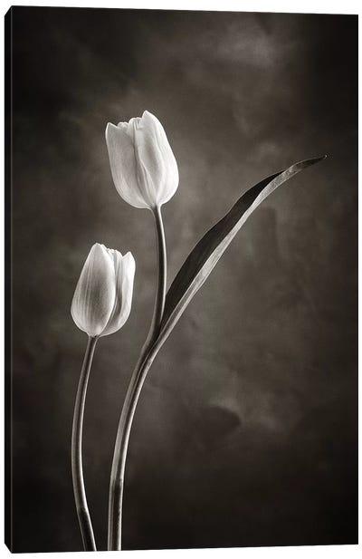 Two-tone Tulips IV Canvas Print #WAC4422