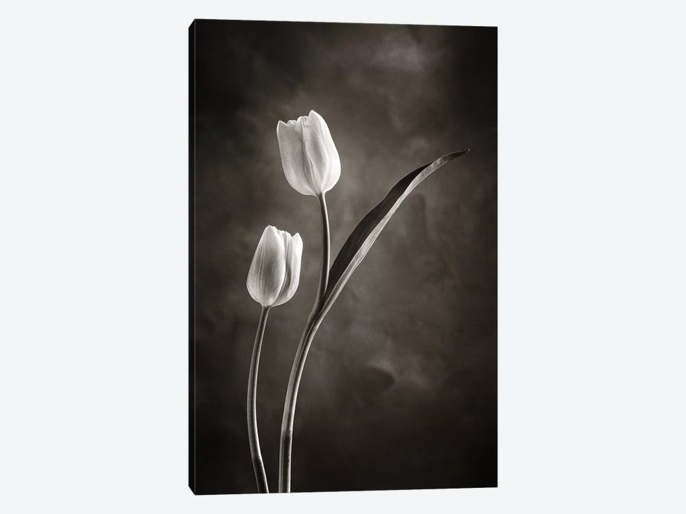 Two-tone Tulips IV by Debra Van Swearingen 1-piece Canvas Print