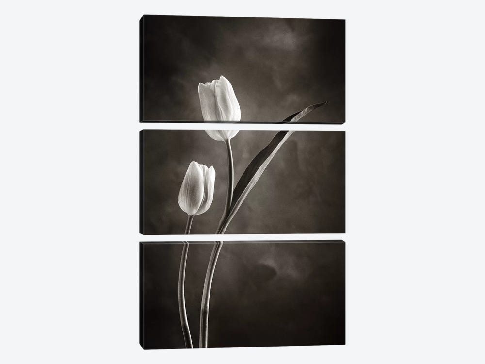 Two-tone Tulips IV by Debra Van Swearingen 3-piece Canvas Print