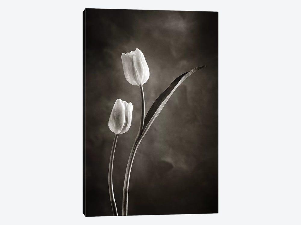 Two-tone Tulips IV by Debra Van Swearingen 1-piece Canvas Print