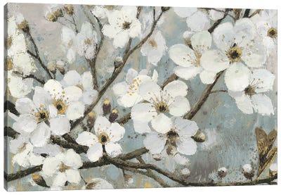 Cherry Blossoms I Canvas Art Print