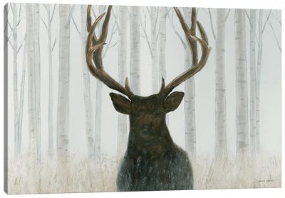Into The Forest Canvas Art Print