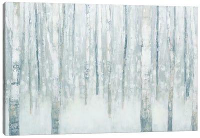 Birches In Winter II Canvas Art Print