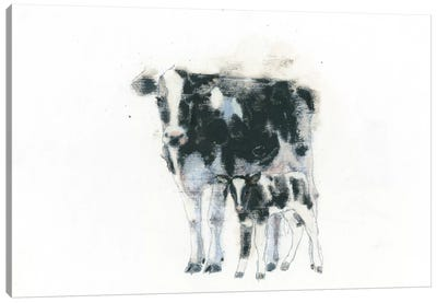 Cow And Calf Canvas Art Print
