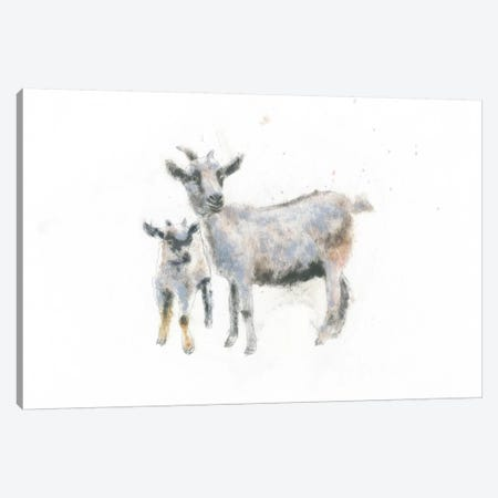Goat And Kid Canvas Print #WAC4468} by Emily Adams Art Print