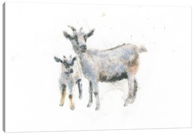 Goat And Kid Canvas Art Print