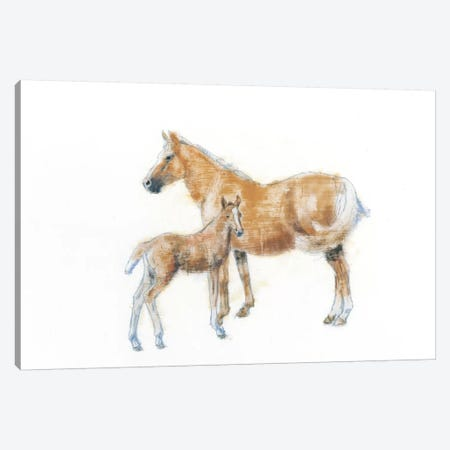 Horse And Colt Canvas Print #WAC4470} by Emily Adams Canvas Art