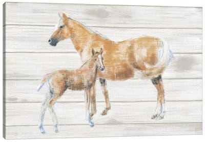 Horse And Colt On Wood Canvas Art Print