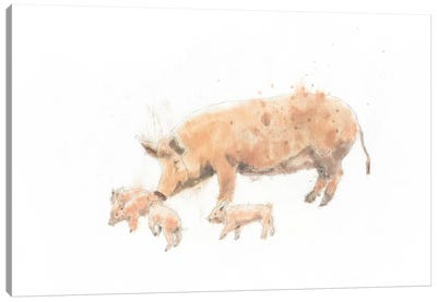 Pig And Piglet Canvas Art Print