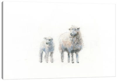 Sheep And Lamb Canvas Art Print