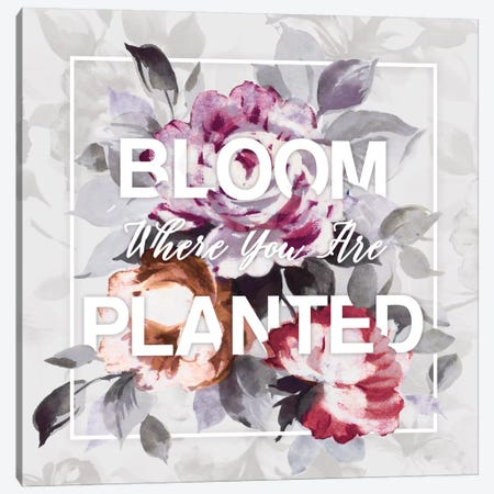 Bloom Where You Are Planted Canvas Print #WAC4479} by Wild Apple Portfolio Canvas Artwork