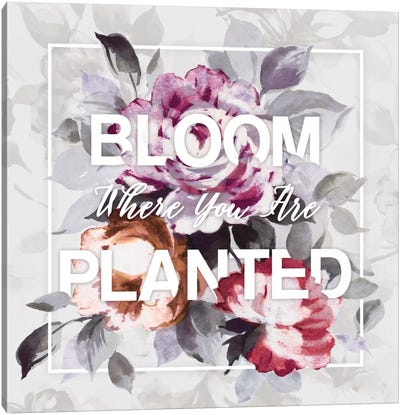 Bloom Where You Are Planted Canvas Print #WAC4479