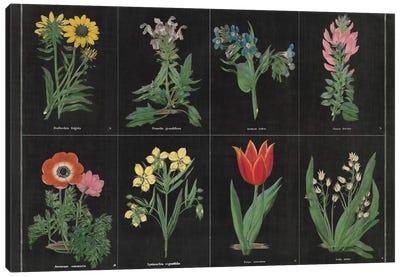Botanical Chart I Canvas Print #WAC4482