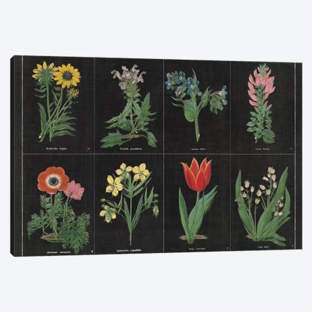 Botanical Chart I Canvas Print #WAC4482} by Wild Apple Portfolio Canvas Print
