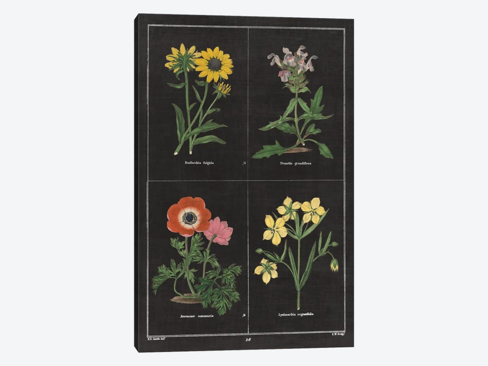 Botanical Chart II by Wild Apple Portfolio 1-piece Canvas Art