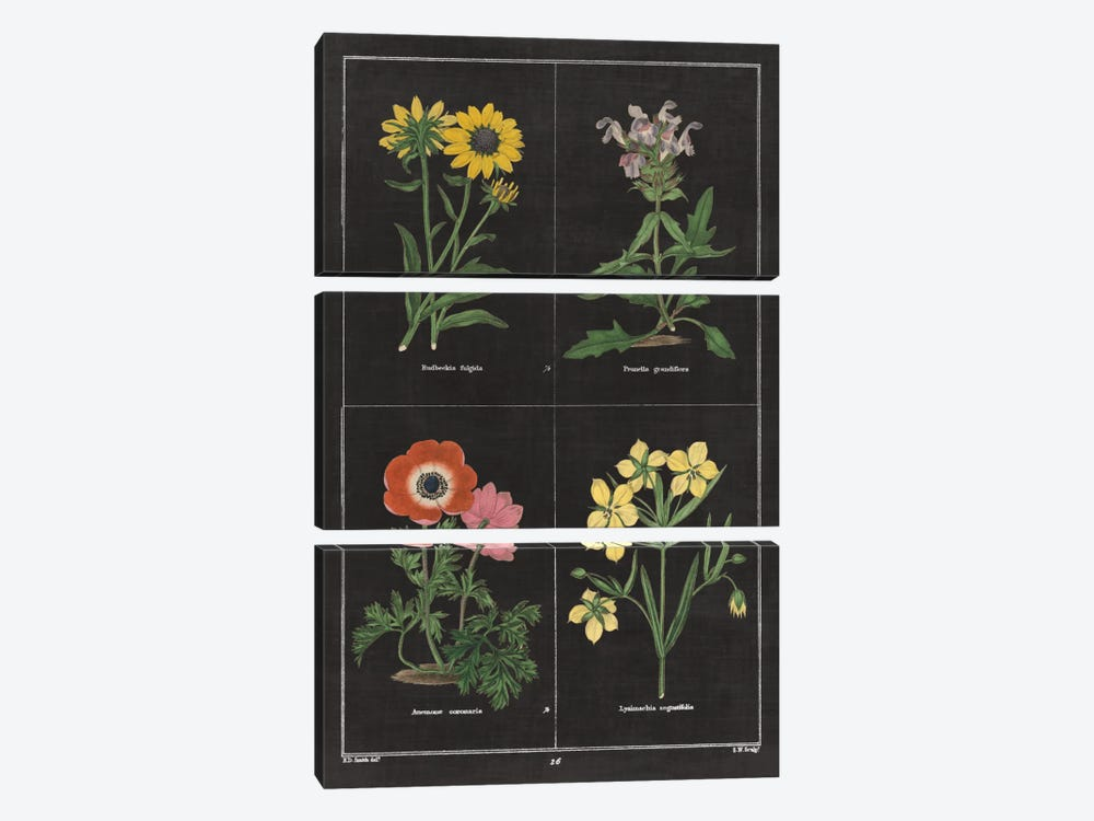 Botanical Chart II by Wild Apple Portfolio 3-piece Canvas Art