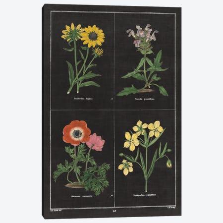 Botanical Chart II Canvas Print #WAC4483} by Wild Apple Portfolio Art Print