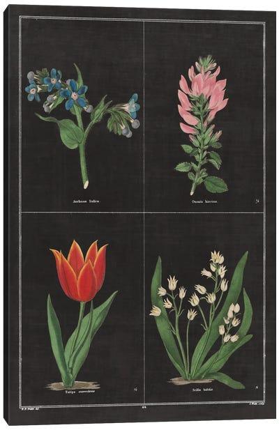 Botanical Chart III Canvas Print #WAC4484