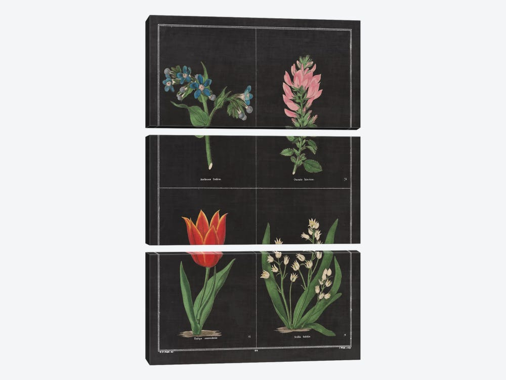 Botanical Chart III by Wild Apple Portfolio 3-piece Canvas Art Print