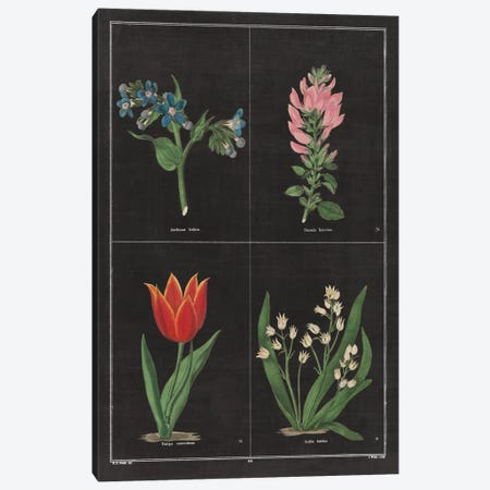 Botanical Chart III Canvas Print #WAC4484} by Wild Apple Portfolio Canvas Artwork