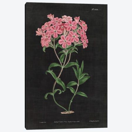 Botanical Chart VI Canvas Print #WAC4485} by Wild Apple Portfolio Canvas Artwork