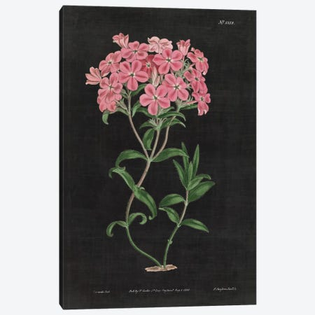 Botanical Chart VI Canvas Print #WAC4485} by Wild Apple Portfolio Canvas Artwork