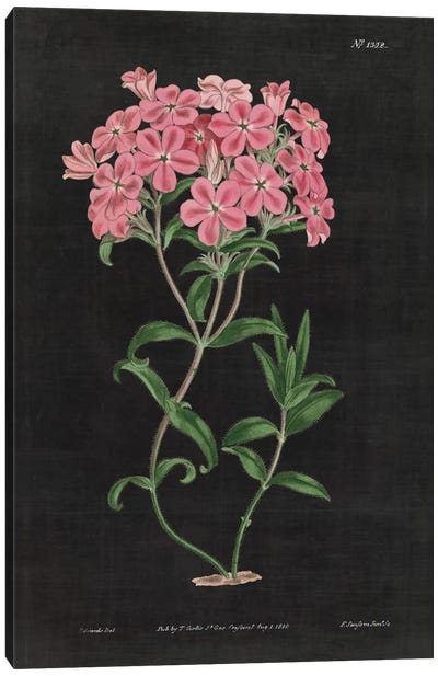 Botanical Chart VI Canvas Print #WAC4485