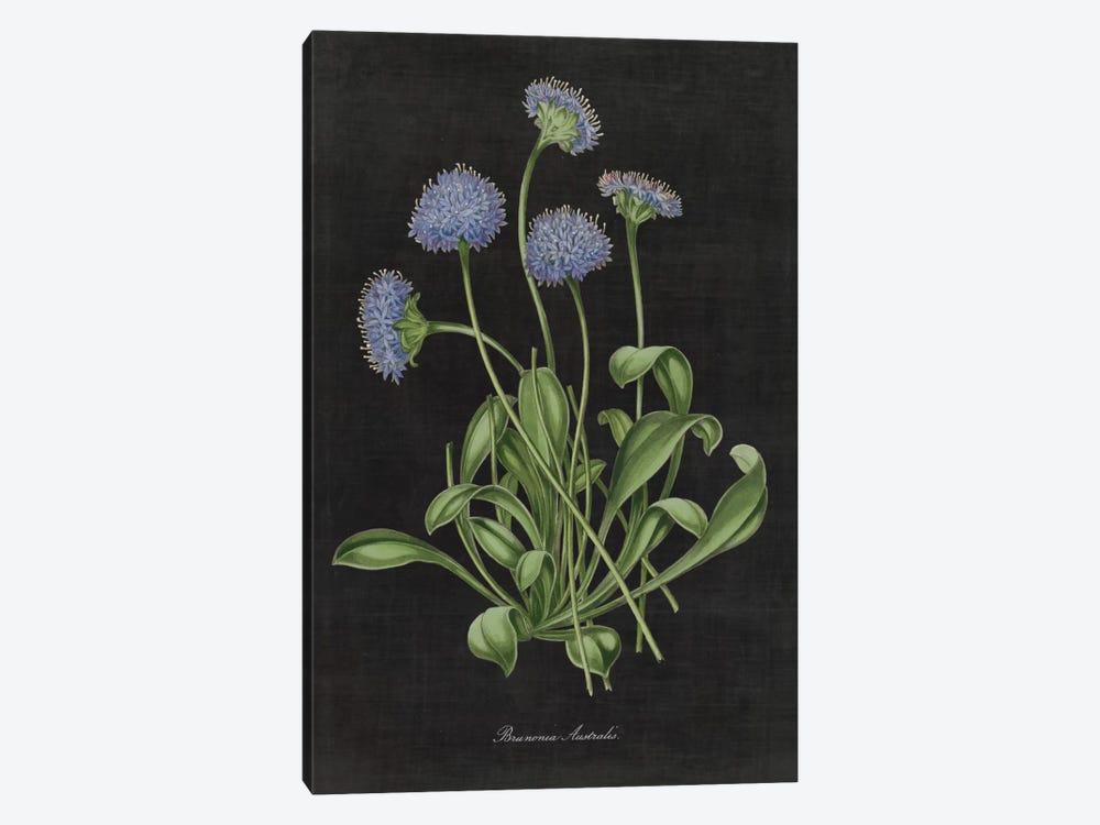 Botanical Chart VII by Wild Apple Portfolio 1-piece Art Print