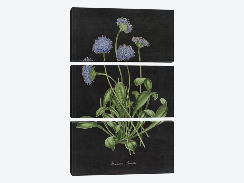 Botanical Chart VII by Wild Apple Portfolio 3-piece Art Print