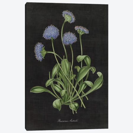 Botanical Chart VII Canvas Print #WAC4486} by Wild Apple Portfolio Canvas Artwork