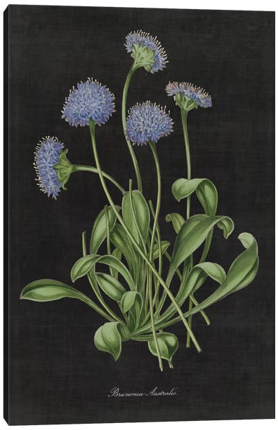 Botanical Chart VII Canvas Art Print