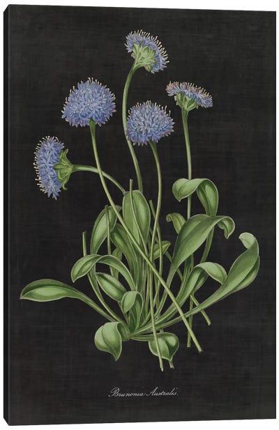 Botanical Chart VII Canvas Art Print