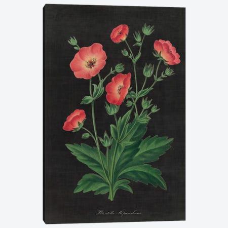 Botanical Chart XII Canvas Print #WAC4487} by Wild Apple Portfolio Canvas Artwork