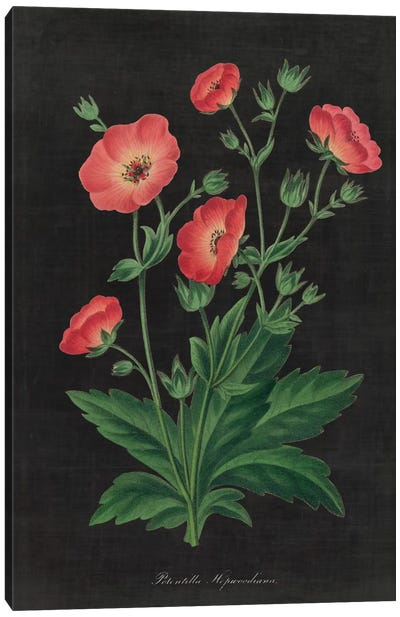 Botanical Chart XII Canvas Print #WAC4487
