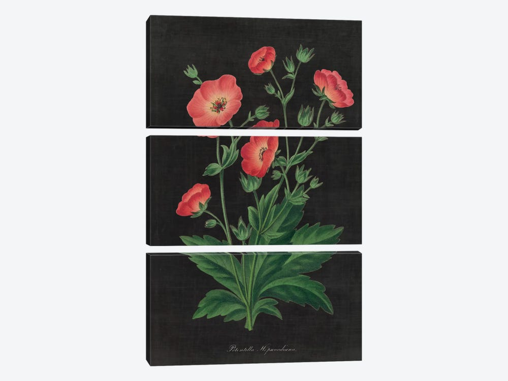 Botanical Chart XII by Wild Apple Portfolio 3-piece Canvas Artwork