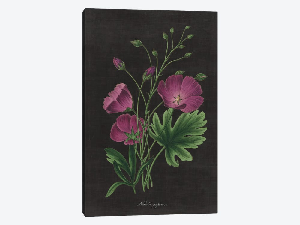 Botanical Chart XIII by Wild Apple Portfolio 1-piece Art Print