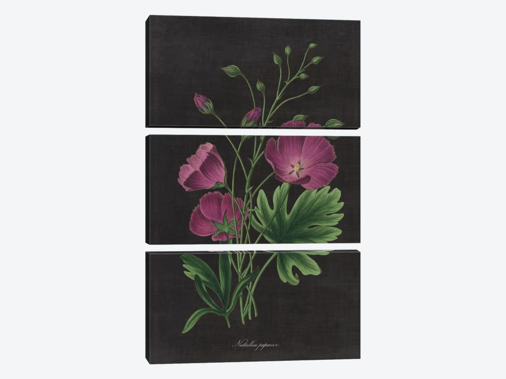 Botanical Chart XIII by Wild Apple Portfolio 3-piece Art Print