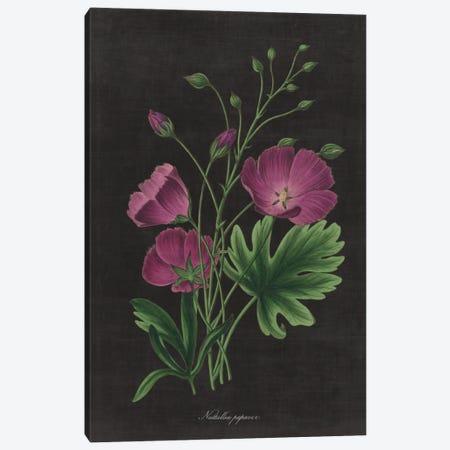 Botanical Chart XIII Canvas Print #WAC4488} by Wild Apple Portfolio Canvas Art Print