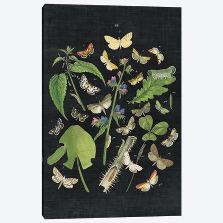 Butterfly Bouquet III Canvas Print #WAC4491} by Wild Apple Portfolio Canvas Art
