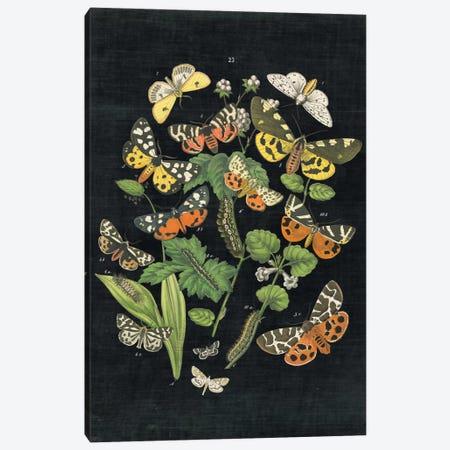 Butterfly Bouquet IV Canvas Print #WAC4492} by Wild Apple Portfolio Canvas Artwork