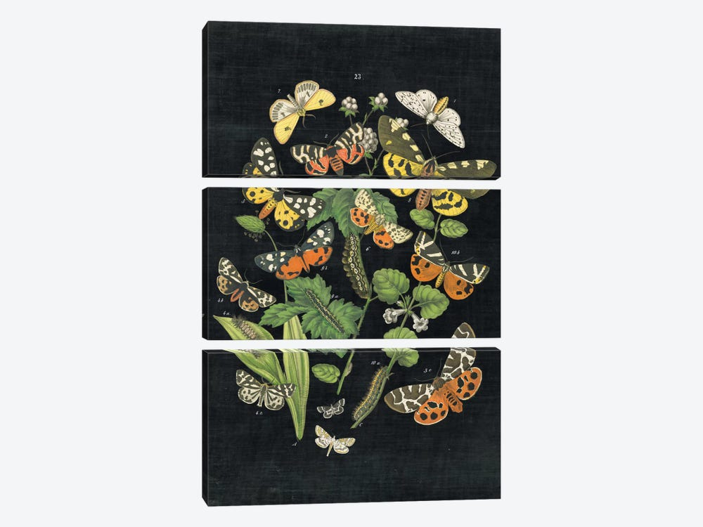 Butterfly Bouquet IV by Wild Apple Portfolio 3-piece Canvas Wall Art