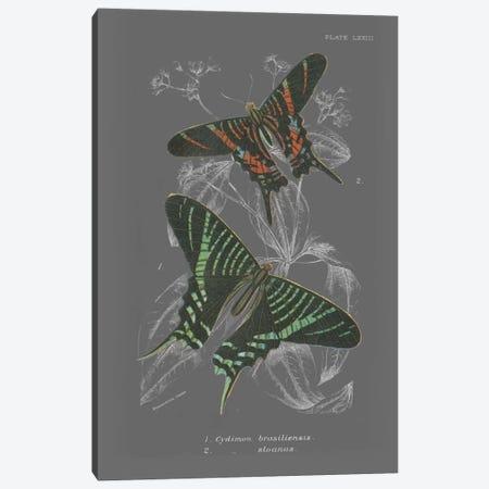 Lepidoptera II Canvas Print #WAC4503} by Wild Apple Portfolio Canvas Artwork