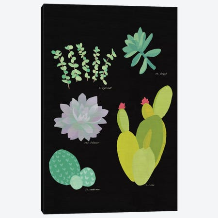 Succulent Plant Chart III Canvas Print #WAC4529} by Wild Apple Portfolio Canvas Artwork
