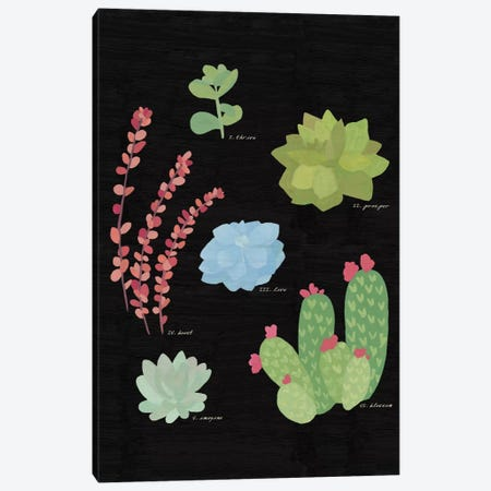 Succulent Plant Chart IV Canvas Print #WAC4530} by Wild Apple Portfolio Canvas Print