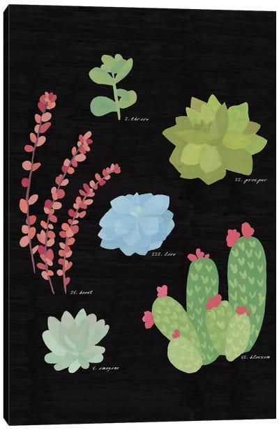 Succulent Plant Chart IV Canvas Print #WAC4530