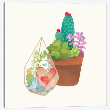 Succulent Garden I Canvas Print #WAC4532} by Wild Apple Portfolio Art Print