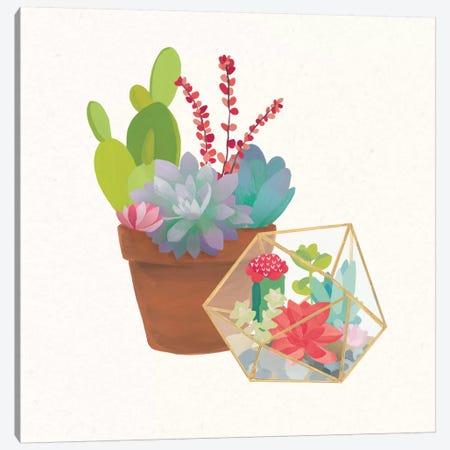 Succulent Garden II Canvas Print #WAC4533} by Wild Apple Portfolio Canvas Print